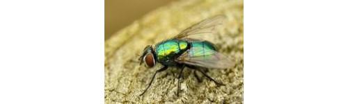 Produits contre les mouches