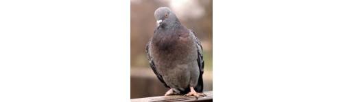 Produits contre les pigeons