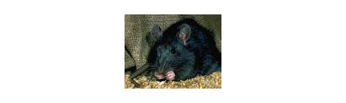 Produits contre les rats & surmulots