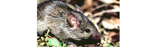 Produits contre les souris